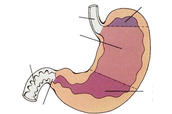 Секреторная функция желудка у больных с тяжелым течением язвенной болезни двенадцатиперстной кишки.