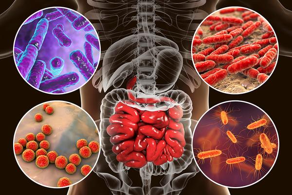 Кишечная микрофлора: взгляд изнутри. Инновационный сборник научных статей №1, 2012г. раскрывает тайну функционирования микробно-тканевого комплекса - микробиоценоза кишечника