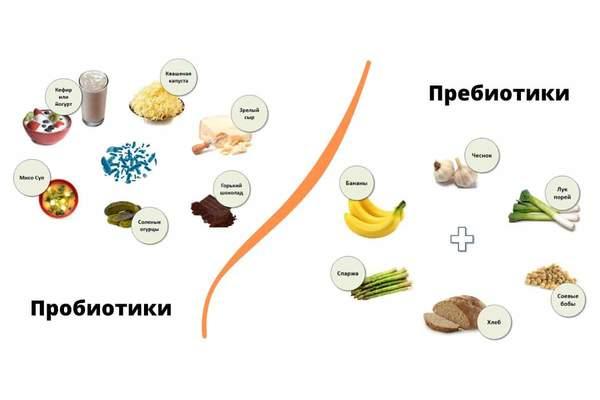 Значение пробиотиков и пребиотиков в регуляции кишечной микрофлоры.