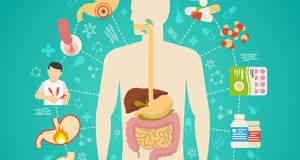Иммунная система в желудочно-кишечном тракте должна либо защищать, либо приспосабливаться