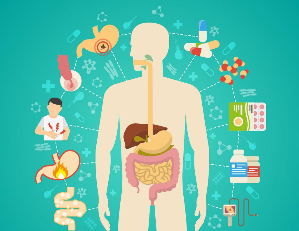 Иммунная система в желудочно-кишечном тракте должна либо защищать, либо приспосабливаться.